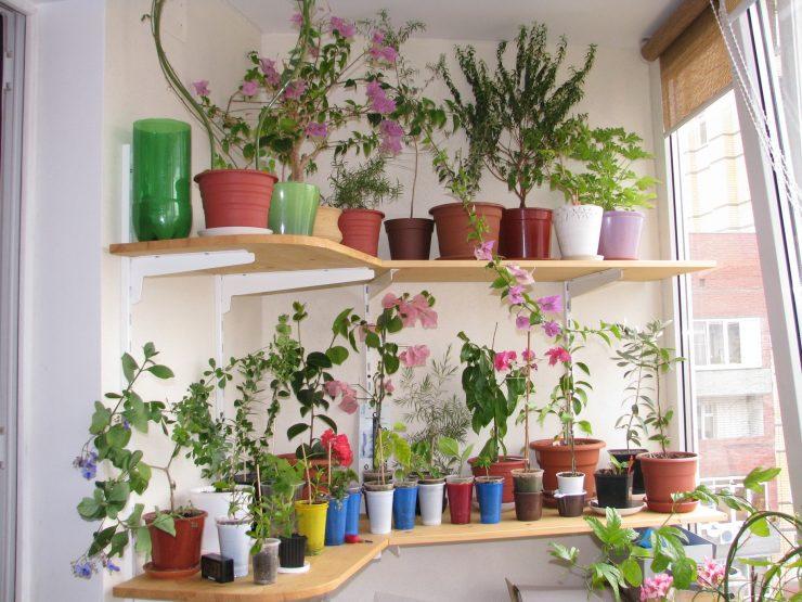 Ландшафтный дизайн в квартире - 77 фото примеров дизайна.